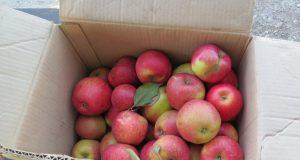 За неделю инспекторы Россельхознадзора «завернули» на границе более двух центнеров продуктов