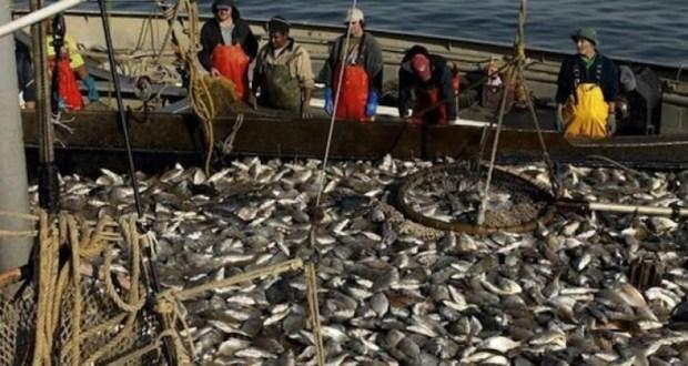 Росрыболовство: добыча барабули и ставриды у берегов Крыма достигла рекордных объемов