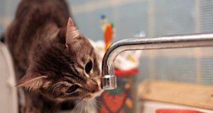 Вниманию симферопольцев: во вторник – перебои водоснабжения