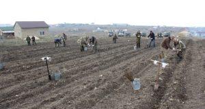 «Посади дерево»: в Симферополе высадили более 8 тысяч саженцев