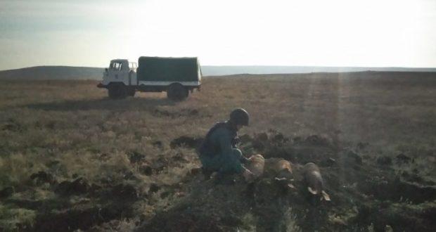 В крымском селе Курортное нашли несколько авиабомб