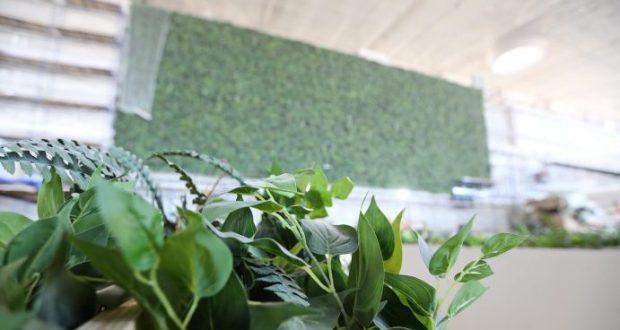 В новом терминале аэропорта «Симферополь» появится самая большая в Европе «зеленая стена»