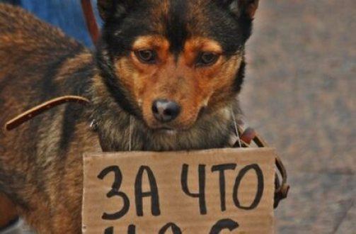 Севастопольца будут судить за то, что убил бездомную собаку
