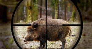 В Крыму поймали браконьера. Охотился на кабанов
