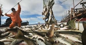 Рыбаки Крыма с начала года ставят рекорды