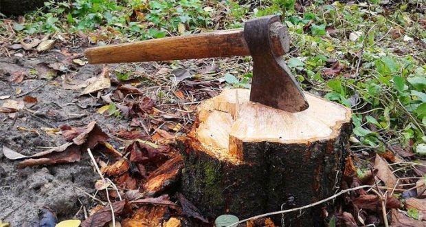 На крымском полуострове рубят лес... Прокуратура Крыма против