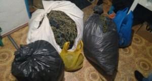 ФСБ перекрыла крупный канал поставки марихуаны из Крыма в Москву