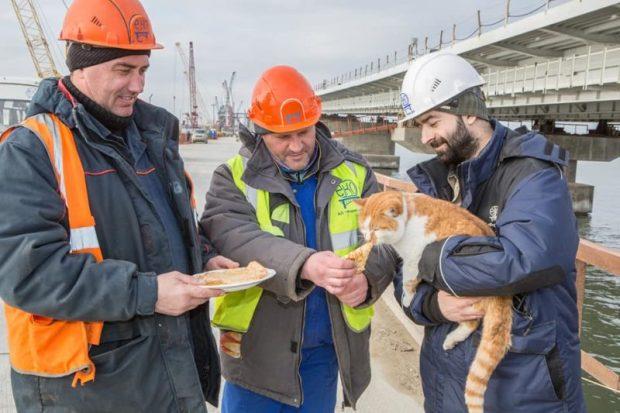 Кот Крымского моста празднует Масленицу - ест блины
