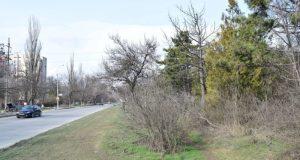 В Симферополе продолжаются работы по благоустройству и озеленению