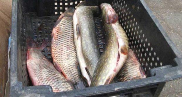 В Алупке сожгли подозрительную рыбу