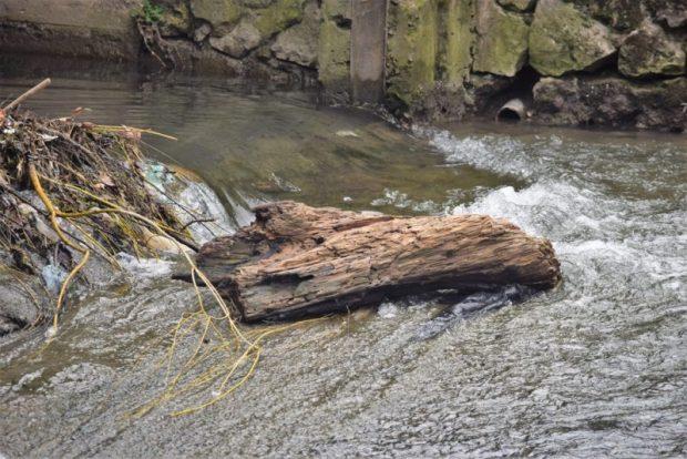 Вдоль набережной Салгир в Симферополе обрезают деревья