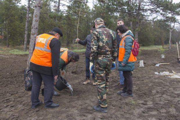 В Симферополе высадили сотню деревьев