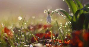 13 и 14 марта в Крыму - дожди