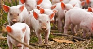 В Минсельхозе Крыма уверяют - фермеров поддерживают и финансируют