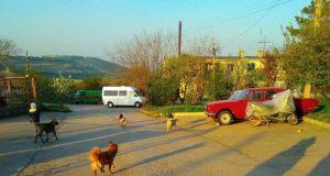 Выездные приёмы и точечное решение проблем. Будни балаклавских депутатов «Добровольца»