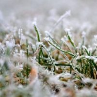 Внимание! В Крыму - заморозки. Температура понизится до минусовых отметок
