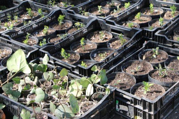 В Севастополе в конце апреля высадят 70 тысяч цветов
