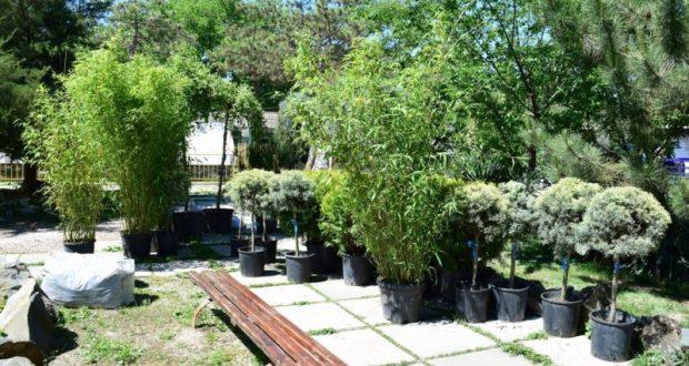 В Детском парке Симферополя высаживают экзотические растения