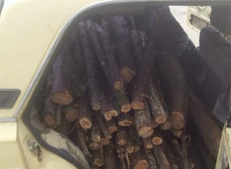 Рубить можжевельник нельзя! В Бахчисарайском районе задержали браконьеров