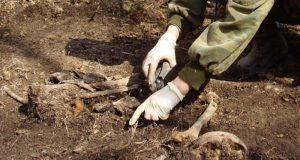 Под Феодосией поисковики обнаружили останки 23 бойцов Красной армии