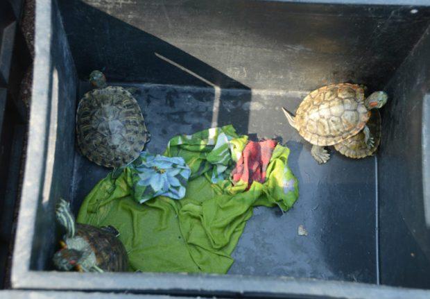 Хроника спасения черепах и вида парка «Монтедор» — на фото Николая Носкова