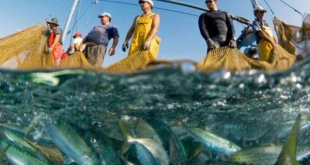 Росрыболовство отмечает снижение объемов вылова рыбы в Азово-Черноморском бассейне