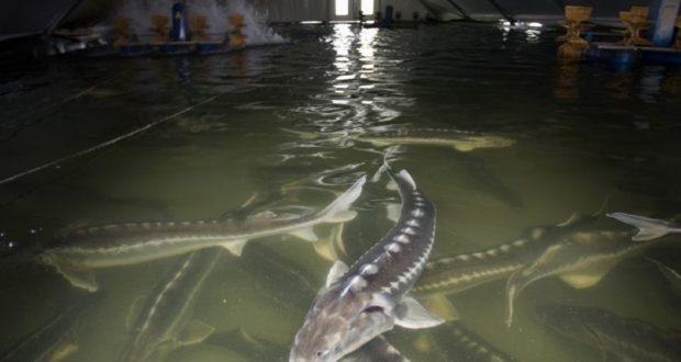 Рыбохозяйствам Крыма могут предоставить равные условия с другими субъектами РФ