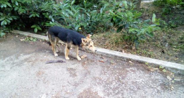 В Алуште спасали собаку. Провалилась в трехметровую яму