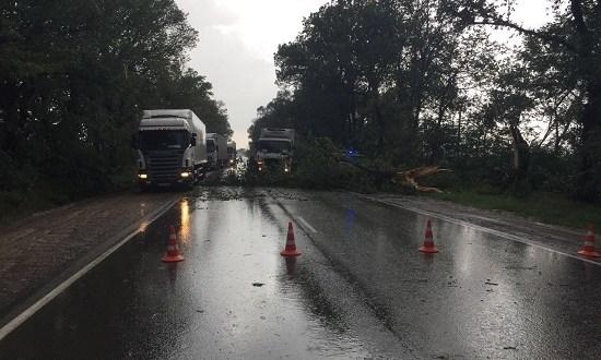 В Ялте едва не утонул украинец, а упавшее дерево заблокировало трассу Симферополь-Феодосия