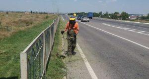 «Крымавтодор» уничтожает карантинные растения вдоль дорог