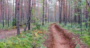 Уроки пожаров урочище Уч-Кош. Противопожарные формирования Ялтинского заповедника усилят