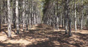 Севастопольские леса посещать нельзя! Официальный запрет