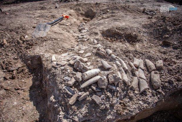 На Керченском полуострове, недалеко от Крымского моста найден скелет древнего кита цетотерия