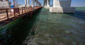Молодь хамсы прячется от хищников в тени Крымского моста