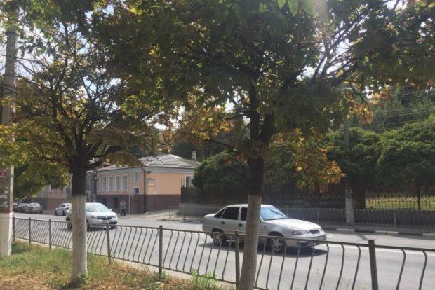 В Симферополе считают деревья и кустарники