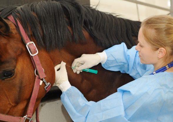 24 сентября в Севастополе стартуют мероприятия по вакцинации животных