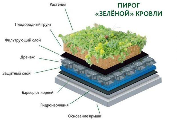 Модно и зелено: почему стоит разбить на крыше... сад