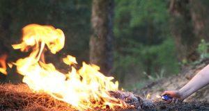 Крымчанина, планировавшего поджечь лес в горах Ялты, отправили в колонию на 4 года