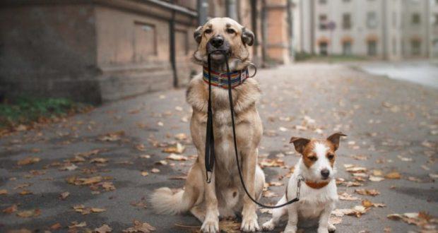 Ялта - один из самых удобных городов для отдыхающих с домашними животными