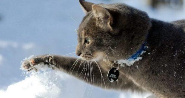 До конца недели в Крыму - зима. И дожди будут, и мокрый снег