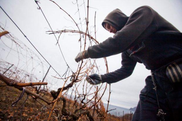 Крымская «Массандра»: как здесь провели последний в этом году рабочий день