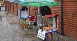 В Симферополе 1 декабря чиновники и ветеринары общались с продавцами животных