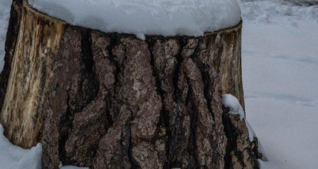В Кировском районе Крыма задержали лесоруба-нелегала
