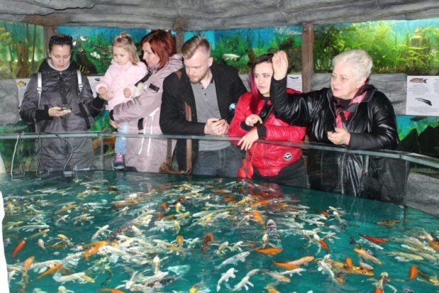 В Алуштинском аквариуме теперь есть открытый бассейн. Его обитатели - 5 тысяч карпов кои