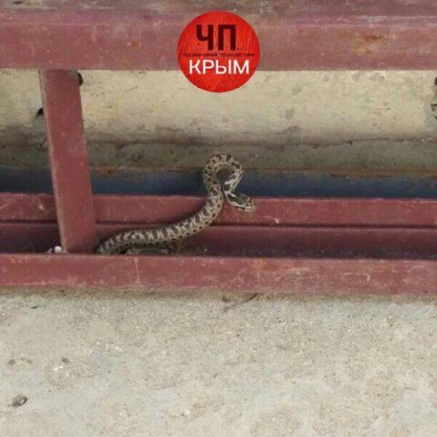 Крымчане в соцсетях жалуются на нашествие змей