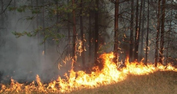Пожар на территории урочища Уч-Кош, вблизи Ялты ликвидирован в кратчайшие сроки