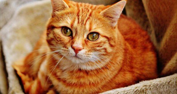 Правительство РФ решило подумать о... кошках