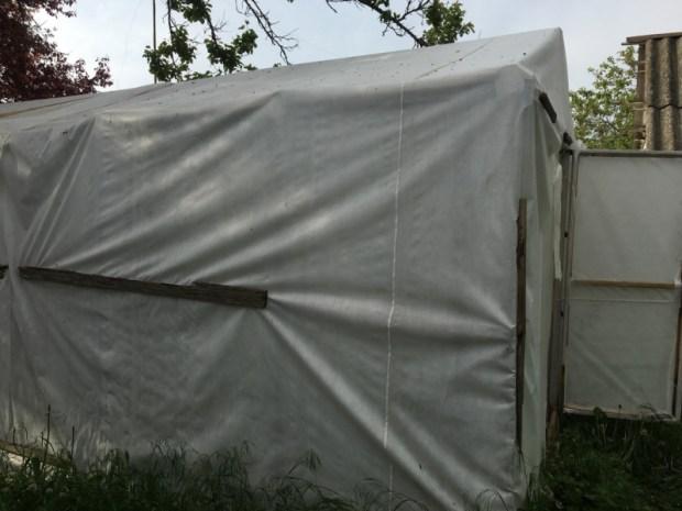 Сельчанин в Симферопольском районе заботливо культивировал коноплю. В теплице