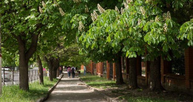 В Симферополе проведут инвентаризацию зелёных насаждений