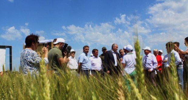 В течение десяти дней крымские аграрии приступят к сбору урожаю зерновых